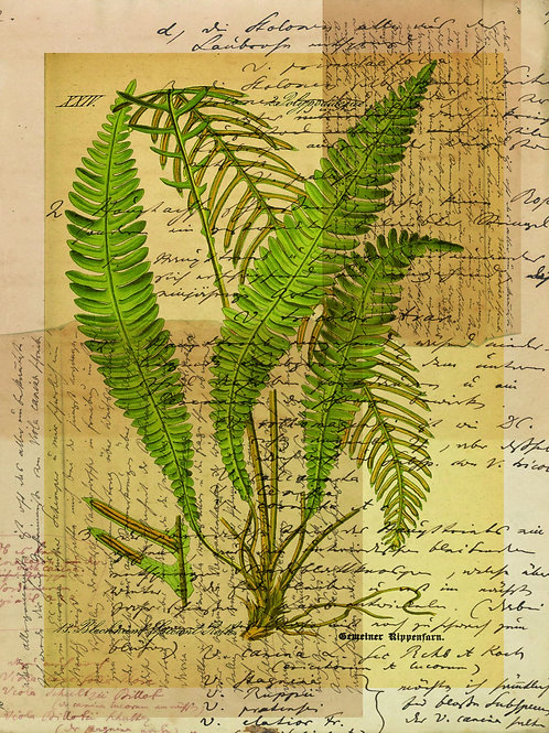 French Fern Printable-No.008