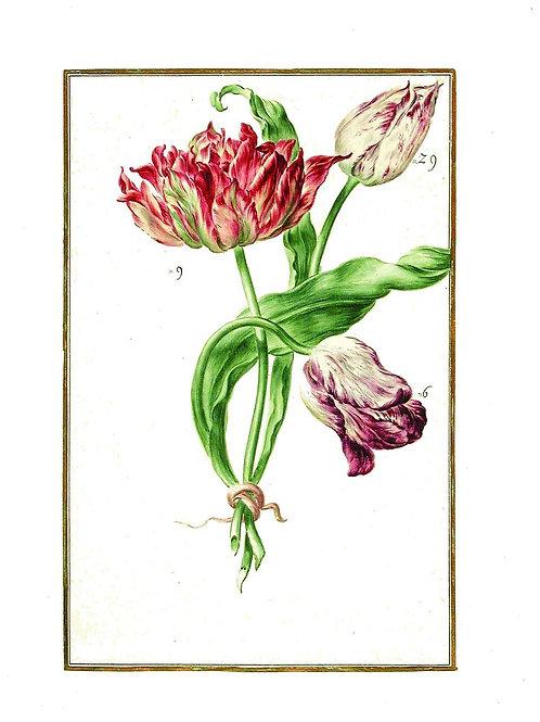 Botanical Print No. 12557