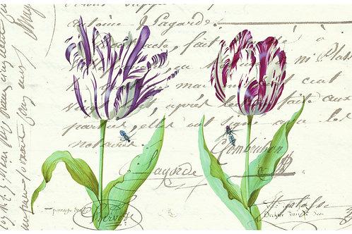 Botanical Printable print No 024
