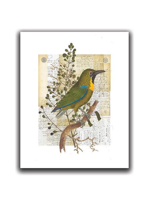 Bird Collage Print No. 01003-Blank Note Card