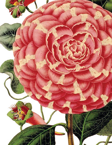 botanical-1250a.jpg