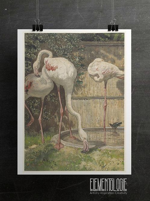 Vintage Flamingo Print-No.55342