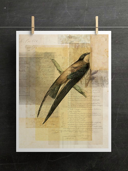 Bird Collage Print-Number 129