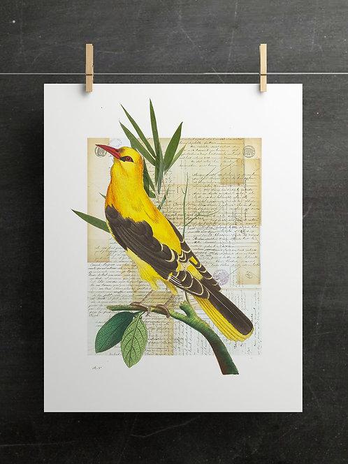 Bird Collage Print-No. 01000