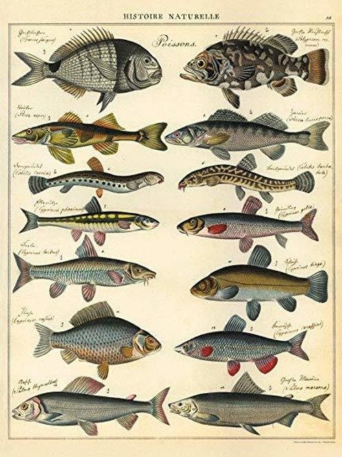 Natural History of Fish