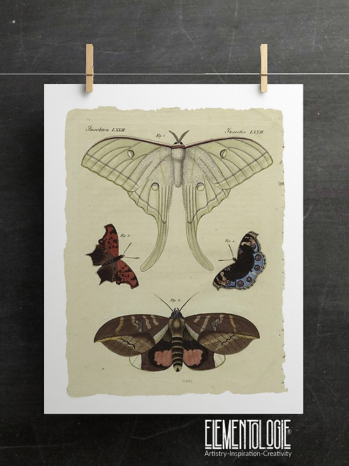Antique Insect Print-No. 901