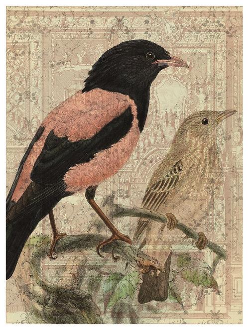 Bird Print No. 33355