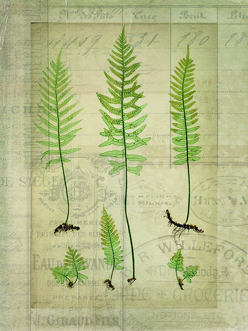 French Fern Printable-No.010