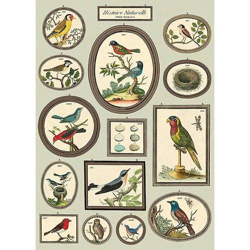 Histoire Naturelle Serie Oiseaux