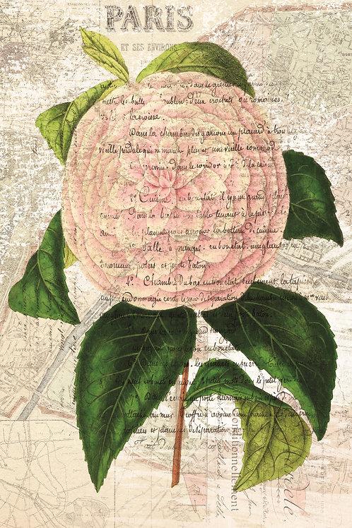 French Botanical Print No. 24