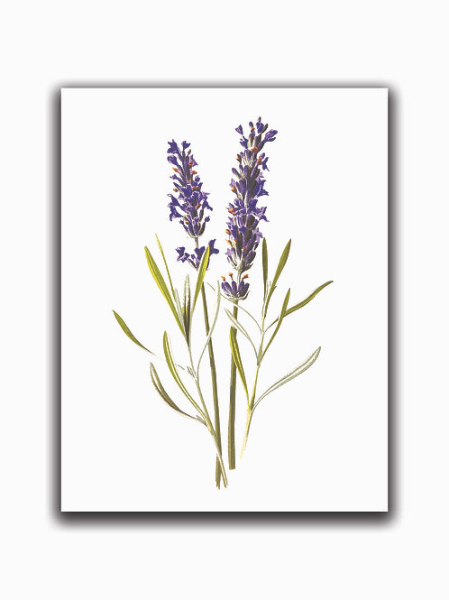 Botanical Print 999 -Blank Note Card