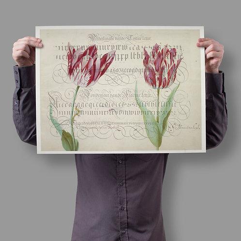 Botanical Printable print No 043