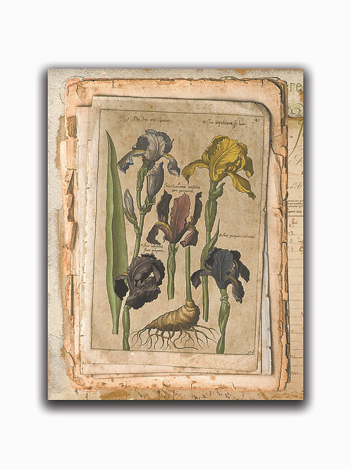 Botanical Collage 55918-Blank Note Card