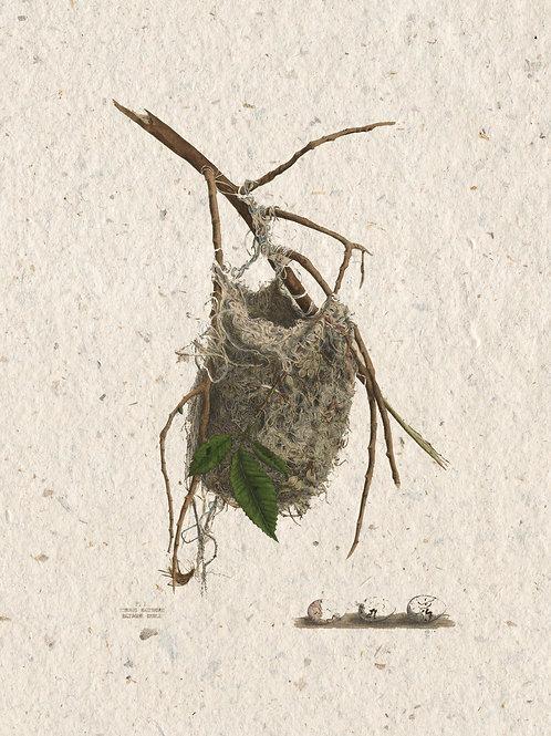 Nest Print No. 001