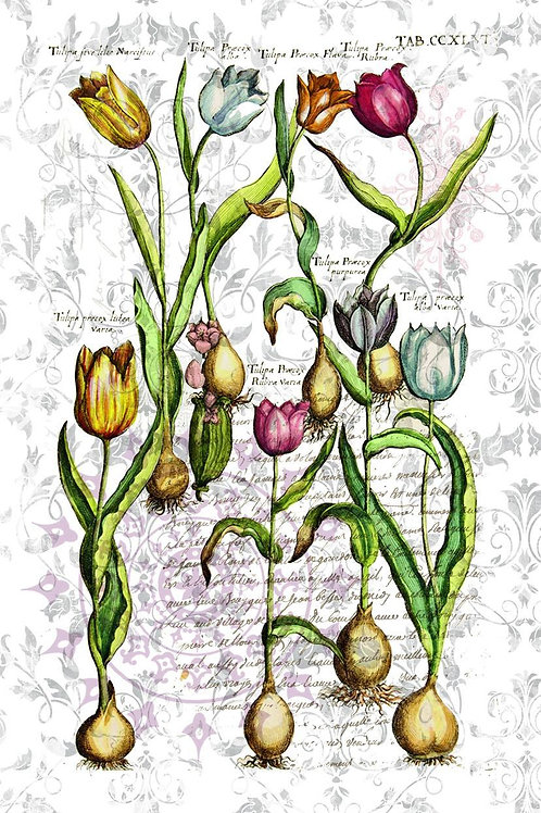 French Botanical Collage Print No. 22