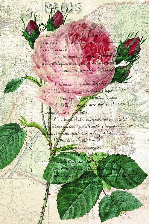 Botanical Print-No. 48