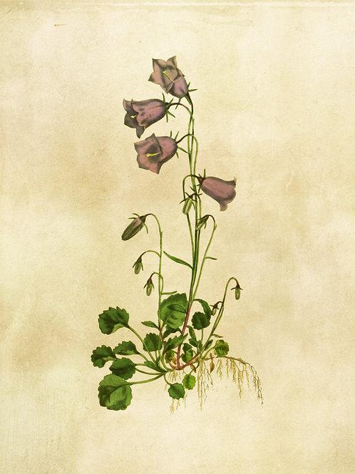 Botanical Printable print No 011