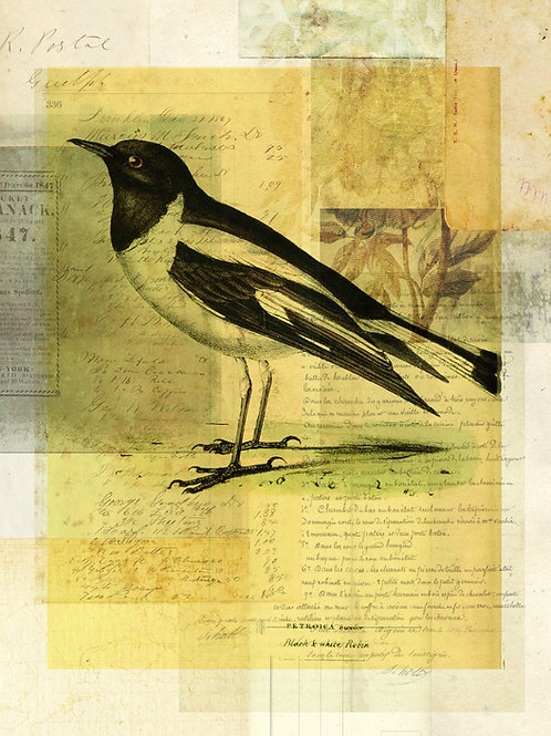 Bird Collage Print No. 130