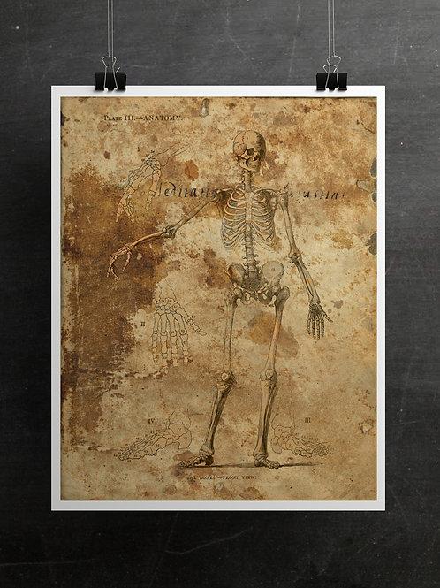 Anatomy Collage Printable No.001