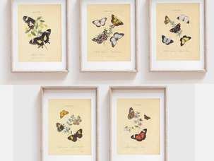 Free Instant Download-Vintage Butterfly Print Set
