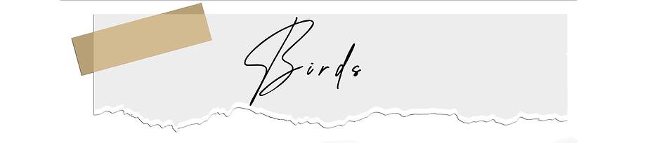 birdsA.png