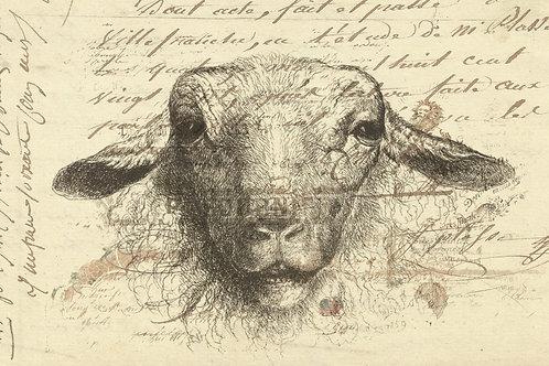 Vintage Sheep Collage No. 66324