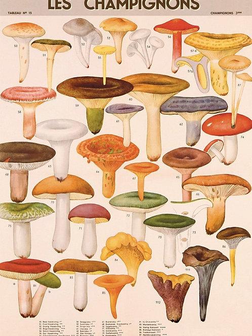 Le Champignons (Mushrooms)