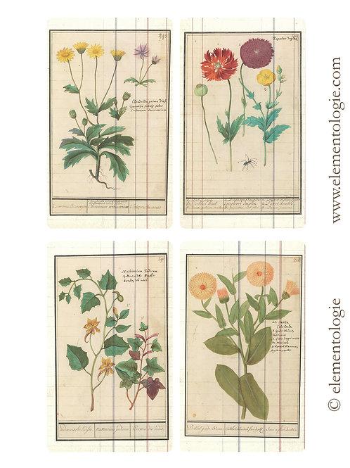 Botanical Journal Cards- No 87201-Digital Download