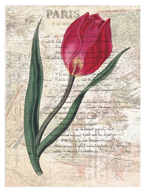 French Botanical Print No. 25