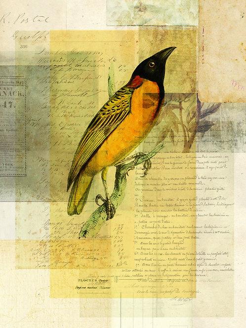 Bird Collage Print No. 128