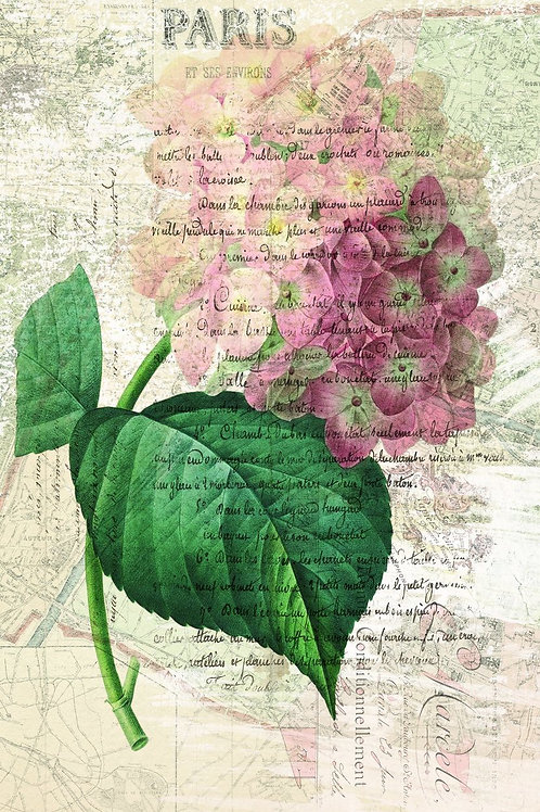 French Botanical Collage Print No. 027