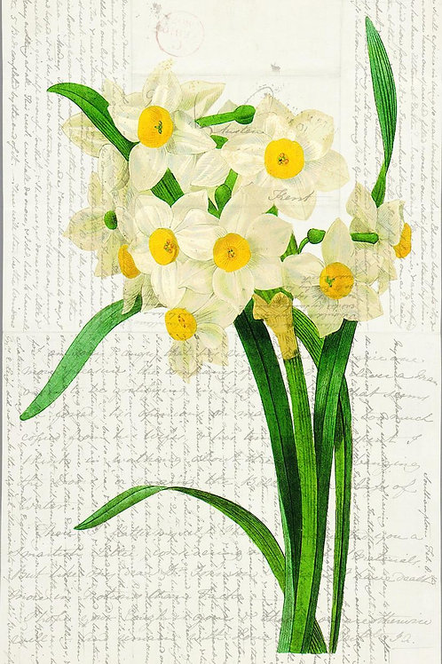 Botanical Print No. 04