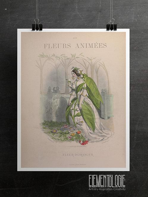 Botanical Printable print No 070