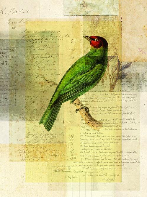 Bird Collage Print-No. 126
