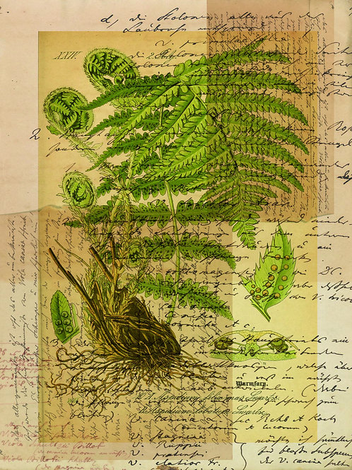 French Fern Printable-No.007