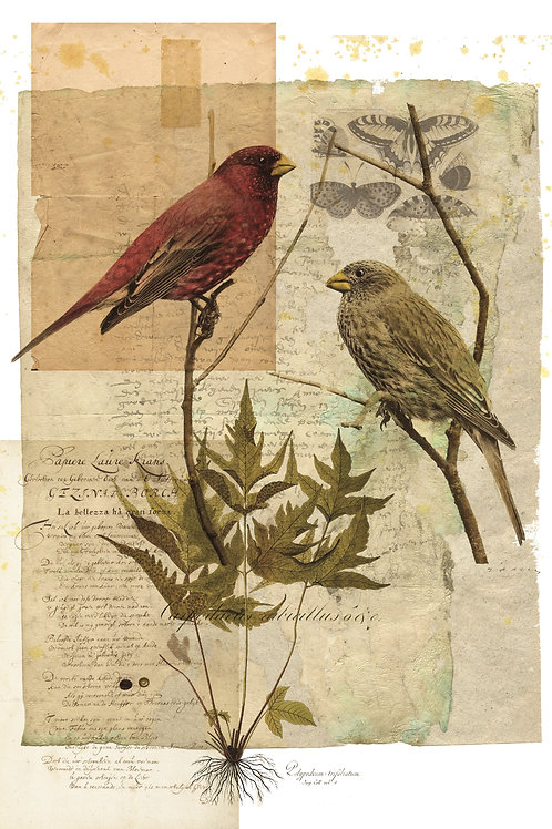 Bird Collage Print-No.0101
