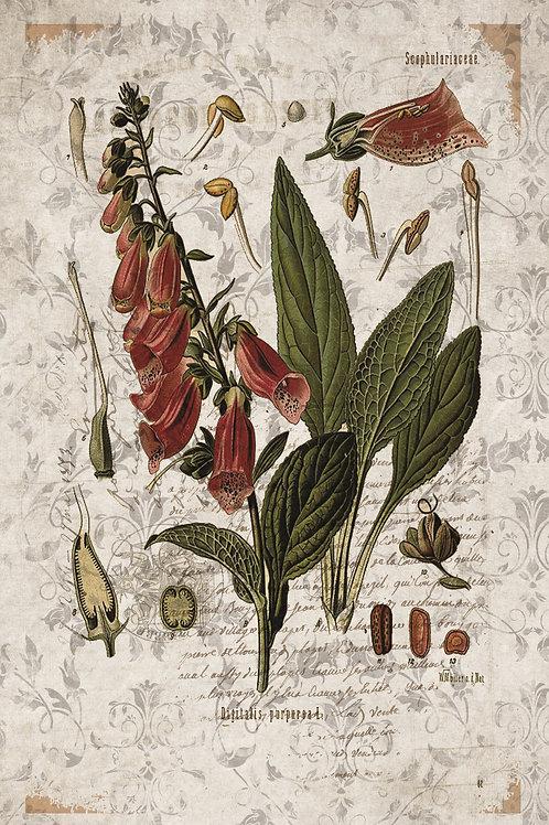French Botanical Print No. 19