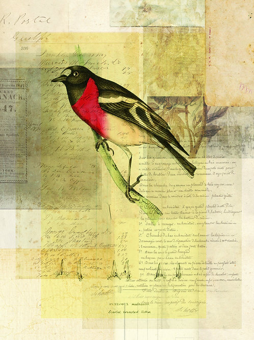 Bird Collage Print No. 113