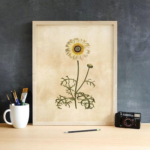 Botanical Print-No. 007