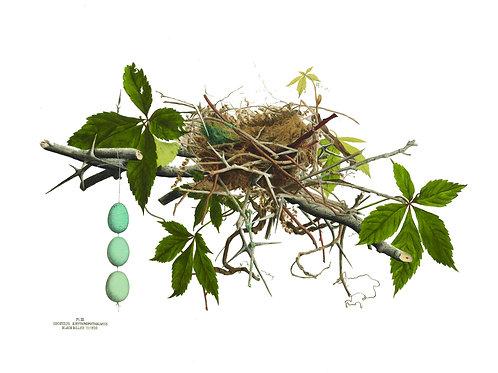 Nest Print No. 002