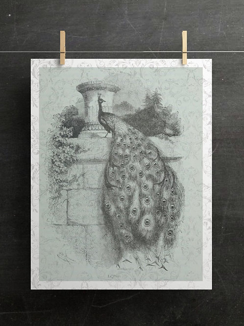 Antique Peacock Print-No.001-Blank Note Card