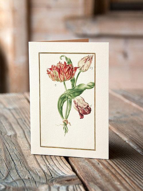 Botanical Print No. 12557-Blank Note Card