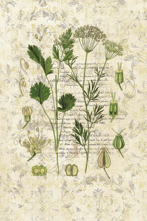 French Botanical Print No. 10