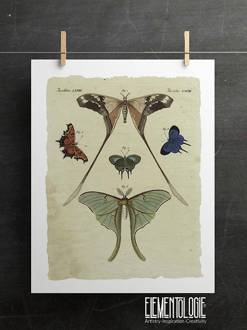 Antique Insect Print-No. 900