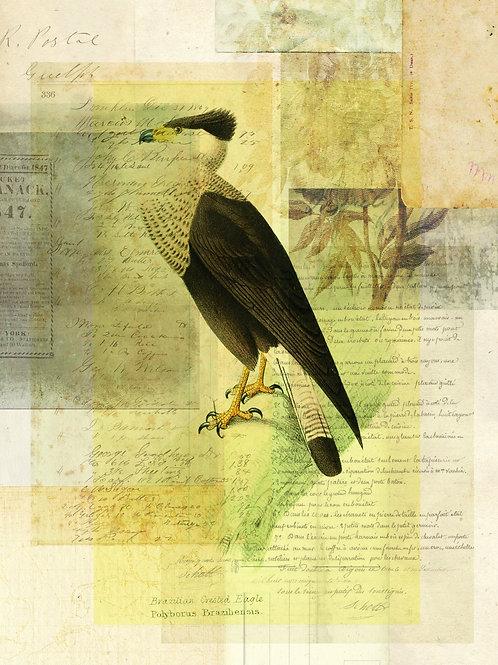 Bird Collage Print No. 118
