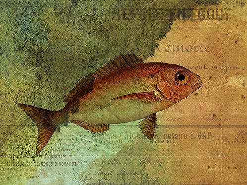 Fish Collage Print No. 22002
