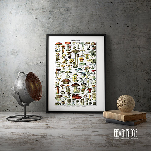 French Dictionary Plate Print-No.22134- Mushrooms/Champignons