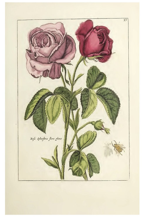 Botanical Print-No. 1007