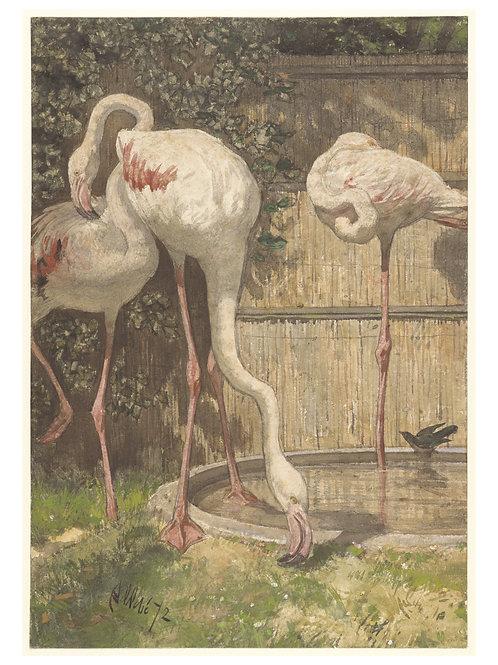 Bird Print No. 55342