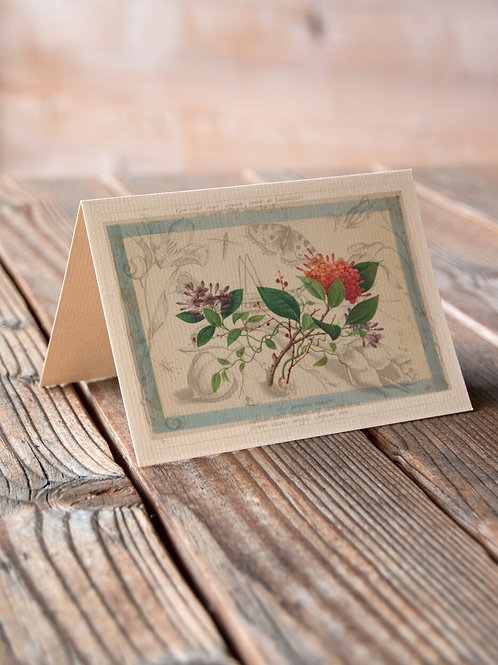 Antique Botanical Collage Print-No.078-Blank Note Card